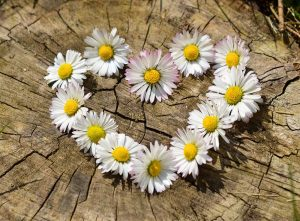 Posy of daisies reflecting success at relationship counselling manchester