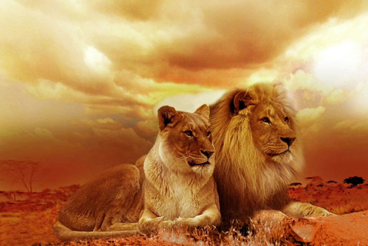Couples Therapy portrayed by a lion and a lioness against a sunset